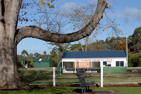 Bough of a giant English Elm tree frames the equipment shed and shelter of the Mount Barker croquet club.