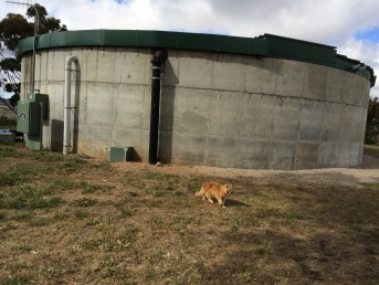 Reserve tank and pumping station. The ginger cat is Scoop He enjoys accompanying Pop-Star on his walks.